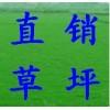低价供天堂草坪,马尼拉草坪,黑麦草混播13775528172