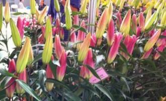 冯伟:网上销售花卉,一年净赚10万元
