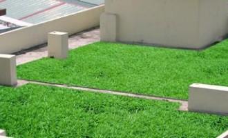 管理屋顶佛甲草坪的方法