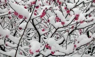 植物话语:您知道最吉祥的十种花