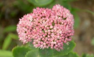 家庭养花之神奇的解毒植物