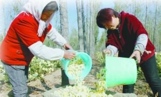 山东东营:林下经济发展会越来越好