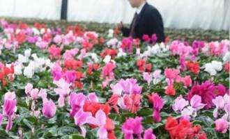 兰州市榆中县:温室花卉种植致富新路子