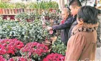 哈尔滨:提前一周迎来年宵花销售旺季