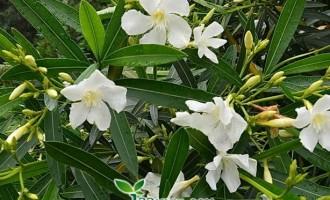 有毒!路边的花草要小心 室内的盆花要注意!
