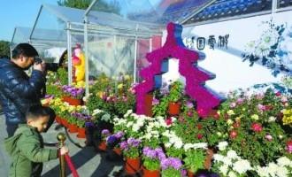 北京:天坛公园菊展 500余种菊花绽放