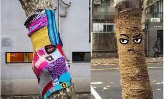 上海:梧桐穿上萌毛衣