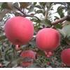 矮化苹果苗,烟富0苹果苗,烟富8苹果苗,烟富3苹果苗