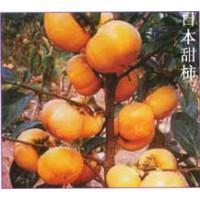 柿子苗1-5公分山楂树 柿子树 苹果树 核桃树