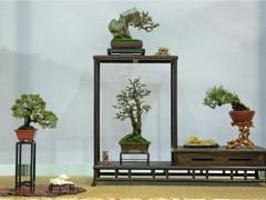新禧2021暨上海市盆景赏石协会第七届年展