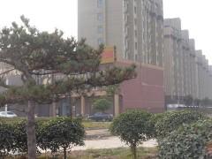 方城县券桥镇:推进乡村绿化 助力乡村振兴