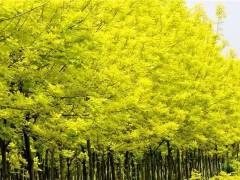苗木种植误区,很多人都做过,一定要避免!