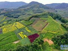 吉林:退耕還林 果熟農富