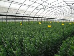 福建花卉苗木种植面积142万亩 产值1063亿