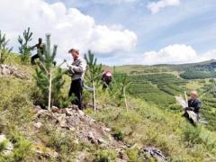 造林5000亩,成林见景!崇礼赛事核心区森林覆盖率已超80%